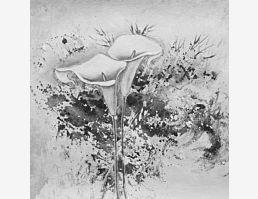 Trichterblüten