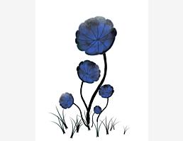 Blaublumig XII