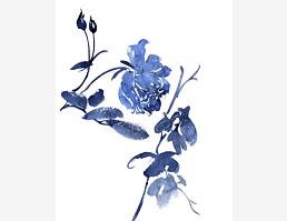 Blaublumig X