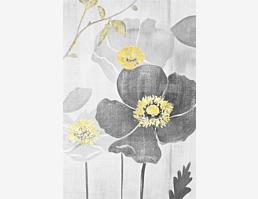 Kohlblütenblume